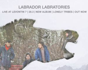 labrador labratories